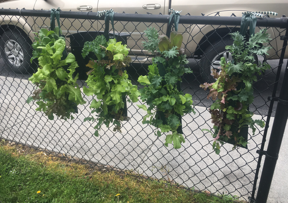 Hanging edible gardens donated by NC Extension last summer