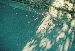 photo_book015