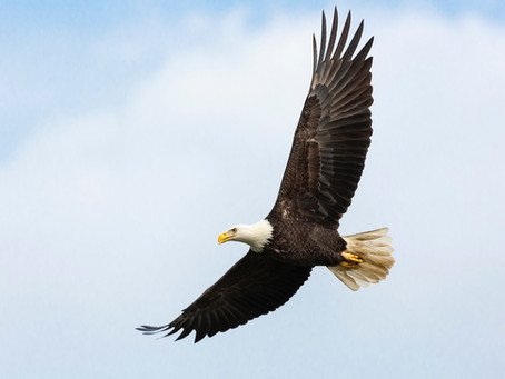 Make your business soar with Aquila Clouds