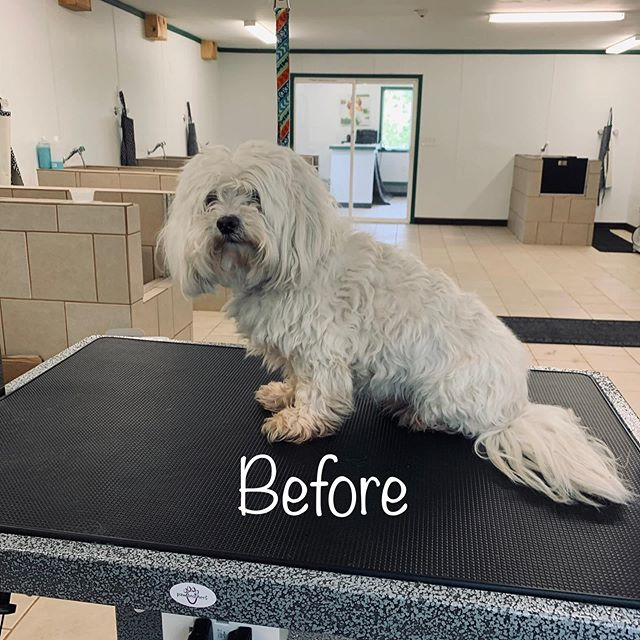 First two days of grooming being open ar