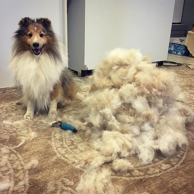 Macz felt amazing after his brushing and