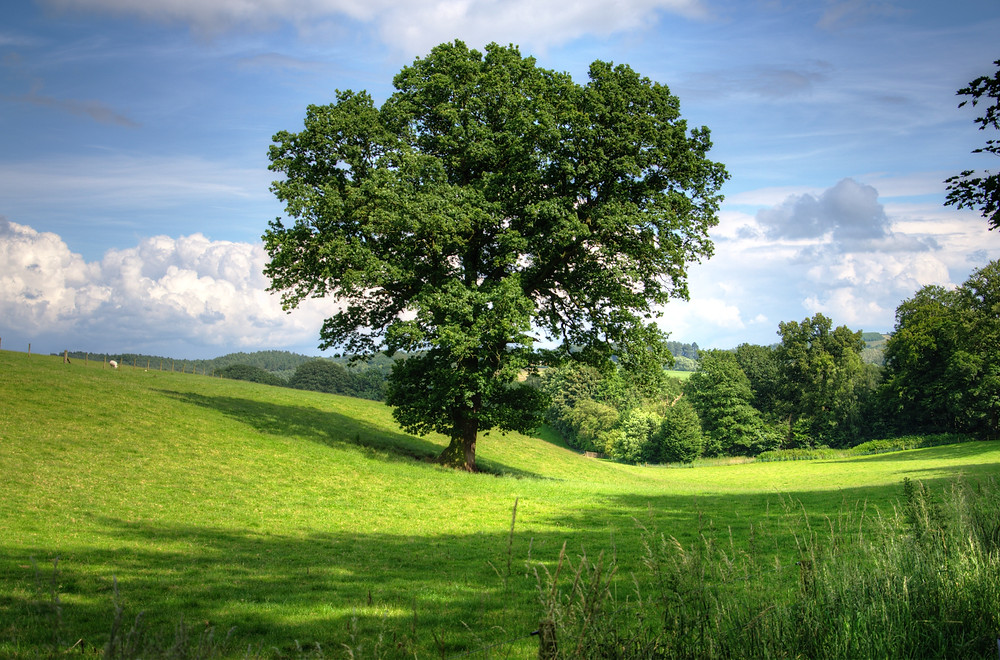 Leafy trees in a green field against the sky