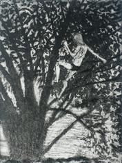 Willow Climber