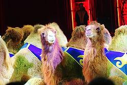 😎 ein zeitloser Blick ... #kamele #came