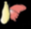 logo-chrysalides.png