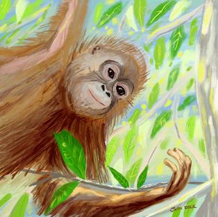 John Dyer iPad Procreate drawing. Orangutans, Borneo