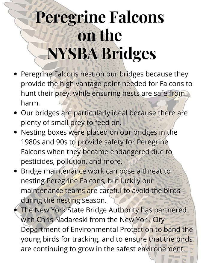 Peregrine Falcons on the NYSBA Bridges.p