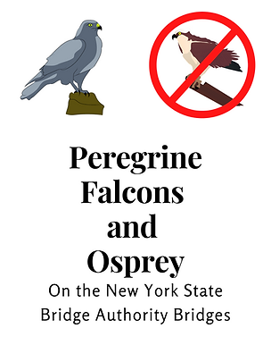 Falcons and Osprey 1.png