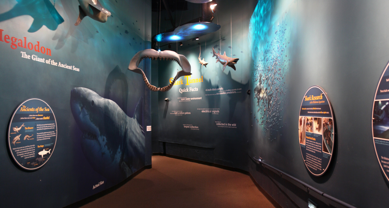 Aquarium shark