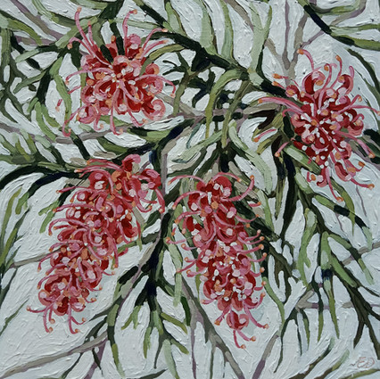 """""""WILD AND UNRULY GREVILLIA'S 2"""""""