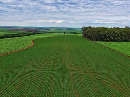 Agronegócio – A nova legislação favorece o produtor rural?
