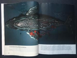 La piel de la ballena, en El País Semanal