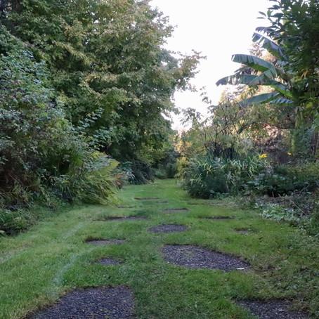 Salem's community gardens: Spots for study breaks, outdoor enjoyment