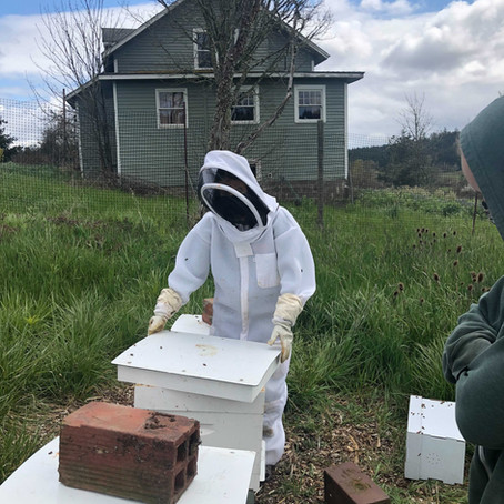 Buzz about bees: New hives installed at Zena