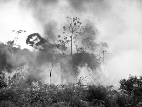 State-sanctioned fires devastate Amazon Rainforest