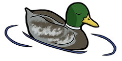 Collegian_duck_8_edited_edited.png