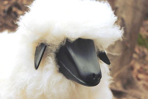 tuline_sheep_mouton_caprinae.jpg