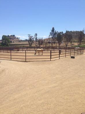ranch 003.JPG