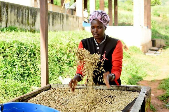 """""""CokO Creator"""" Rwanda ~ FTO Honey"""