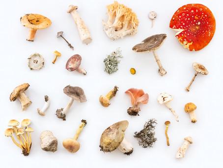 Mushrooms: The Fungus Among Us