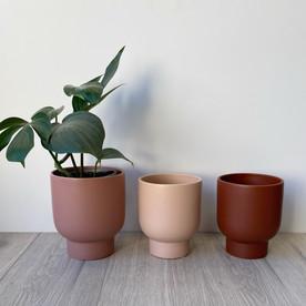Pink Pots.jpg