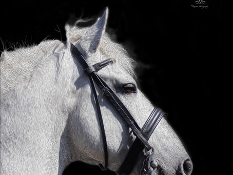Horse Portrait Sitting & Fine Art Print