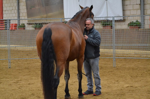Equus_Monty_Roberts-07.jpeg