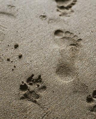 Human steps.jpg