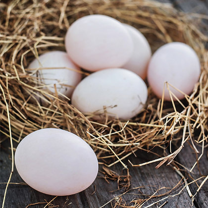 FREE RANGE DUCK EGGS - Size 0 ( 10 eggs/box )