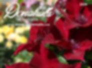 Donahues-Clematis-DIGITAL 1.jpg