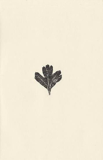 Leaf (II)
