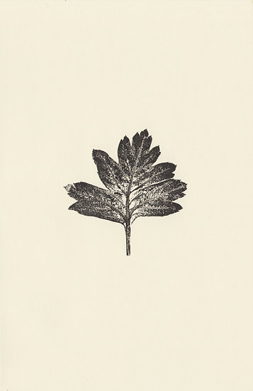 Leaf (III)