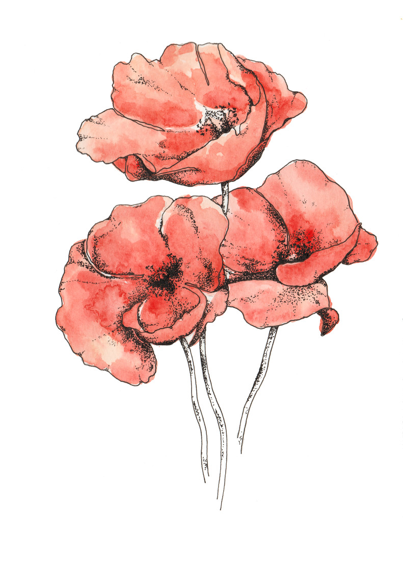 Red Poppies (Comission)