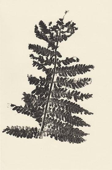 Fern Leaf (I)