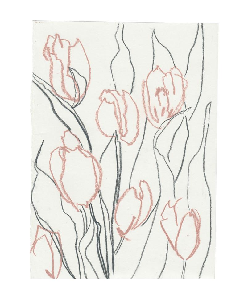 Tulip Study #2
