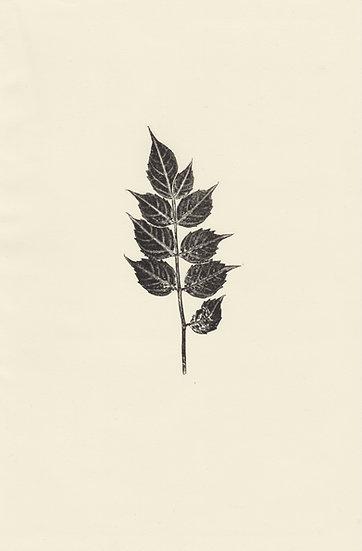 Flora (VII)