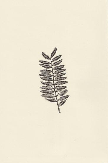 Flora (IV)