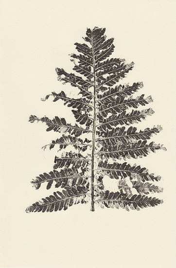 Fern Leaf (II)