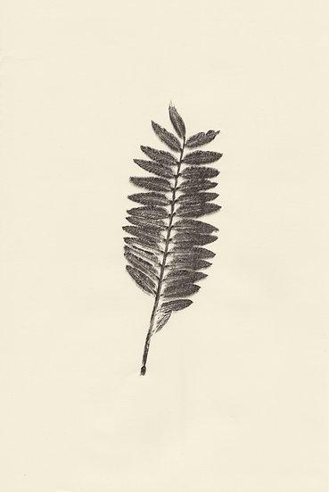 Flora (II)