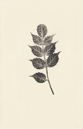 Flora (I)