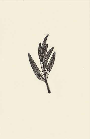 Black Lace (IX)