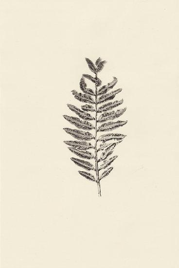 Flora (III)