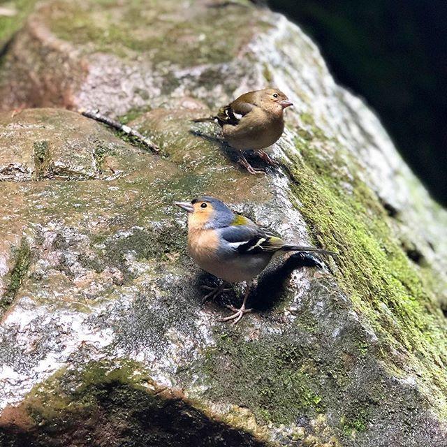 birdsinmadeira