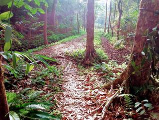 Rainforest Retreat - 3 Tage mitten im Hochland-Regenwald der Western Gahts in Südindien haben ihre S