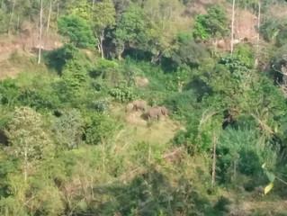 Munnar Trekking -ein Trip zum Ursprung