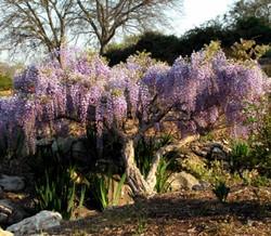 Oklahoma Gardens