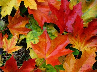 autumn-1-1382513