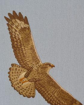 silk shaded buzzard