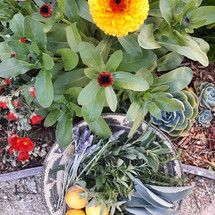 Gifts of The Garden
