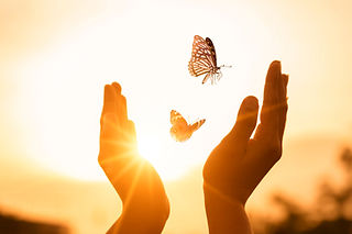 the-girl-frees-the-butterfly-from-moment